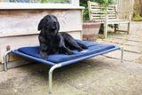 Vyvýšená posteľ pre psov S/M 80 x 70 cm tmavomodrá