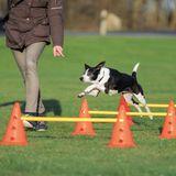Trixie Dog Activity set prekážok L (2 ks)