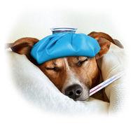 Má Váš pes tráviace problémy? Skúste EnteroZoo!